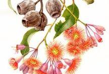 Australian flora / 0
