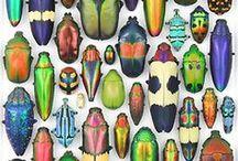 hmyz/členovci