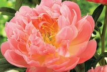 Beautiful Flowers / by Beverly Thomason
