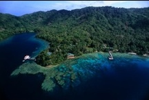 Papua New Guinea / The origin of corals awaits you!