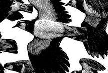 birds / pio