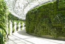 Vegetal & Floral Design