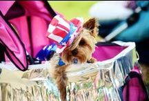 Yorkshire Terriers / I love my Yorkie!