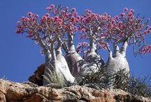 Flore / Plants
