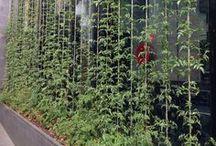 Vertikaler Garten - Garten-und-Freizeit.de