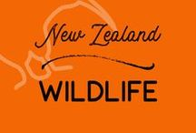 Wildlife | New Zealand / New Zealand birds, marine life and wildlife experiences. Everything about New Zealand wildlife.