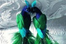 Birds /  Lovebirds