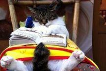 Animals and books / Animal books, animals reading books, and more fun with animals and books!