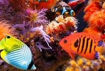 Undersea / Bajo el mar