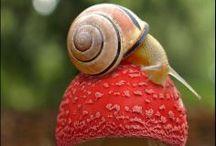 Snail / Caracoles