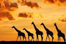 Cool Animal Pics / Animal pictures