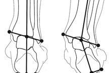 Anatomie / Anatomy for yoga