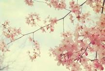 i heart cherry blossom