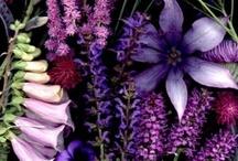 purple, mauve and violet