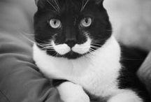 pets / by Jean Mc