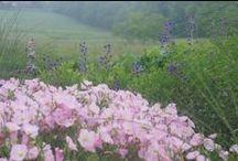 The Donald Pell Gardens Studio / Gardens, Land Development, Whats going on at Donald Pell Gardens (DPG), Landscape Design