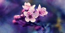 the rebirth time / spring - printemps - primavera
