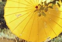 """Umbrellas & Parasols ༺♥༻ / Two of my """"Favorite Themes"""" are: Umbrellas & Parasols. You may find more pins with this theme on my color boards. ༺♥༻ Welcome, there are no pin limits here. Please follow me, if you like what you see! ༺♥༻ / by Babs ༺♥༻ Pins by Color ♡♥♡"""