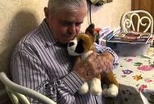 """Memorable Pets Helping Seniors with Alzheimer's / We educate and provide realistic looking stuffed animal dogs and cats for seniors with moderate to severe dementia and Alzheimer's disease.  """"As Alzheimer's disease progresses the need to nurture, love and be loved increase. It is one of the last emotions to go.""""   American Association of Geriatric Psychiatrists AAGP, 2012 Conference in Washington DC"""