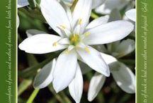 Bachblüten - Bach Flower Remedies