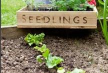 Gardening & Beautiful Gardens