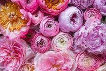 Flowermania