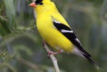 Birds or Bird Things