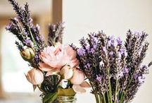 Svatba - jiřka / SVTBA 24.9 Máme volnou ruku, Jiřka ví už jenom barvu... Ostatní je překvapení...  BARVY: fialová, zelená, žlutá, šedá...  Květiny nám budou dodány ze Zahradnický...  Dávejte sem  všechno na co přijdete :) :)