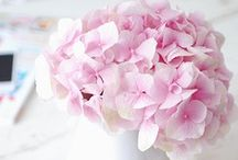 pink (wedding)