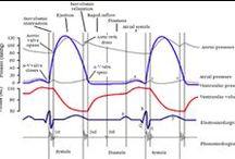 Haemodynamic Monitoring