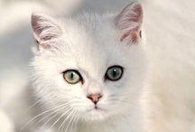 la mia gatta / Si chiama Bianca