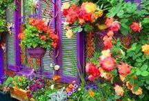 Garden / by Foxy Roxie