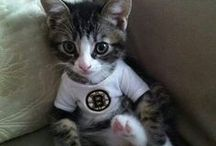 Furry Fans / Hockey fans come in all shapes, sizes and breeds! / by Hockey Hunks