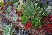 Suculentas / Plantas que eu gosto! / by Ana Ascensão