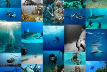 Scuba / Scuba diving, Technical diving, Freediving