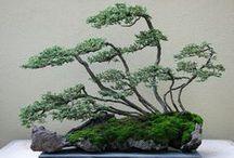 The Botanist {Bonsai}