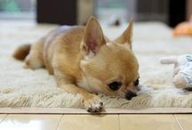 Gaticos, perretes y bichos variados