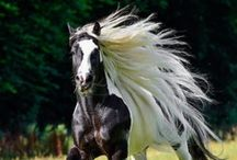 Horses / It is not enough for a man to know how to ride; he must know how to fall.  ~Mexican Proverb