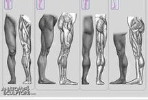 Anatomy / by Lucinda Montgomery