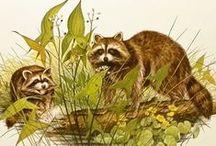 Raccoon / Fun masked bandit pins