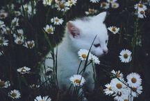 animals ↠ / Cute, amazing animals