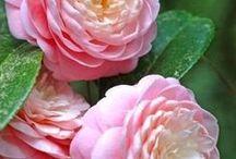Erilaisia kukkia, kasveja
