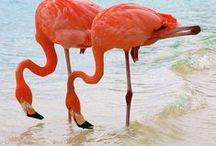 flamingos / by Diane Lee