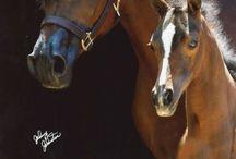 horses / Horses of cuteness