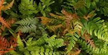 Plants for shade / Easy to grow garden plant ideas for shady areas