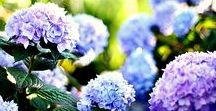 The floral board .... / Χρώματα ,Αρώματα και Ομορφιά ,απ' όλες τις άκρες της Γής !!!