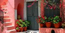 The Queen ,Bougainvillea / It gives colour and  joy , everywhere ! Was born in Brasil ,but it reigns in Mediterranean !!!