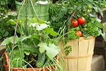 Gardening: From your garden to your kitchen! / Valley at The Garrison takes pride in our gardens, as well as, the locally sourced ingredients we serve in each meal.  / by The Garrison - Garrison, NY
