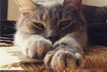 Gatos con Causa / Gatos combatientes. ¿Su misión? Convertir el Planeta en un sitio mejor para los felinos. Gatos movilizados por la esterilización, adopción y defensa de los animales.