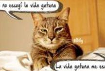 Palabra de Gato / Gatos que hablan, citas felinas inspiradoras, humanos que hablan En nombre del gato. Cuentos de Gatos. Declaraciones de Amor Felinas. Palabras, letras, libros.... todo muy peludo.